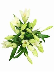 Blumen Günstig Verschicken : lilien g nstig online kaufen verschicken prachtvolle schnittblumen bezahlbare ~ Frokenaadalensverden.com Haus und Dekorationen