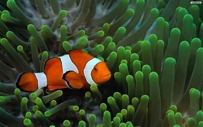 Fish Clown Fun Under Animal Walldiskpaper Clarabelle