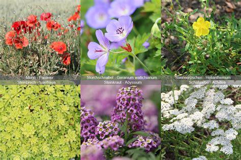 Pflanzen Für Steingarten Immergrün by Steingarten Hausgarten Net