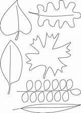 Draw Coloring Pages Lasagna Template Leaf Printable Drawing Sketch sketch template