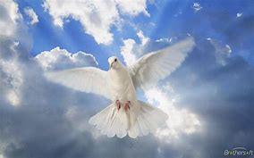 Image result for The Pigeon in World Peace