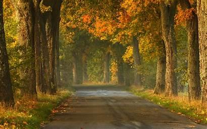 Road Shutterstock Open Trees Fall