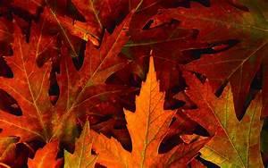Fall Leaves Desktop Backgrounds - Wallpaper Cave