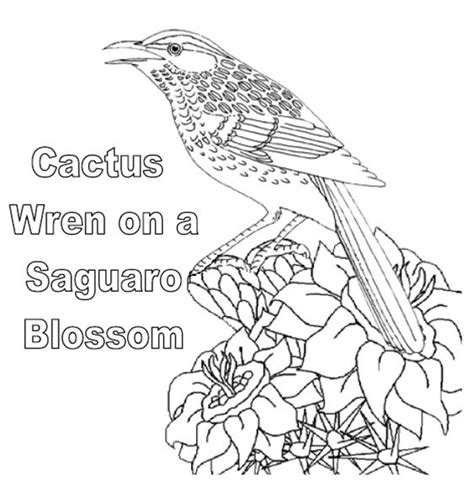 coloring activity pages cactus wren   saguaro blossom arizona state bird coloring page