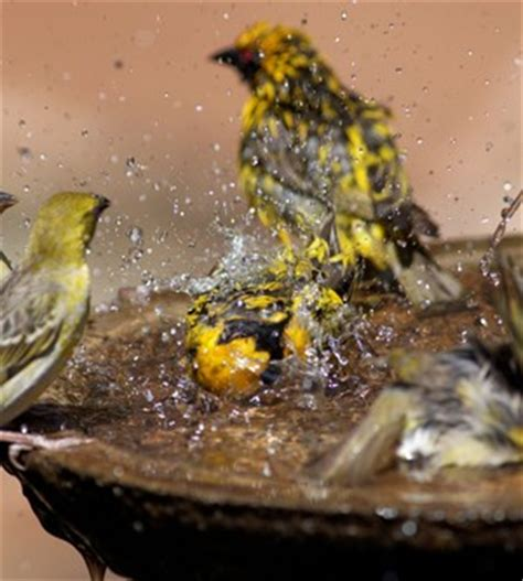 stop mosquitos in your bird bath on the house