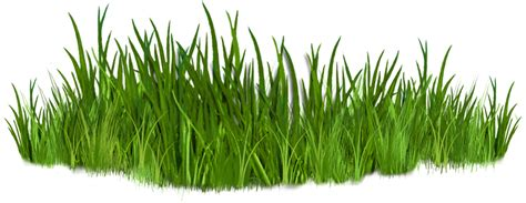 Clipart Grass Best Grass Clipart 10835 Clipartion