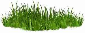 Best Grass Clipart #10835 - Clipartion.com