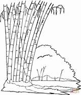 Bamboo Coloring Pages Jungle Printable Leaves Trees Drawing Sheets Supercoloring Colourings sketch template