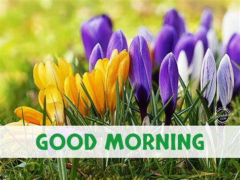 Good Morning Pictures, Images, Graphics For Facebook, Whatsapp  Page 11