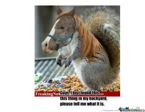 Weird Animal Memes