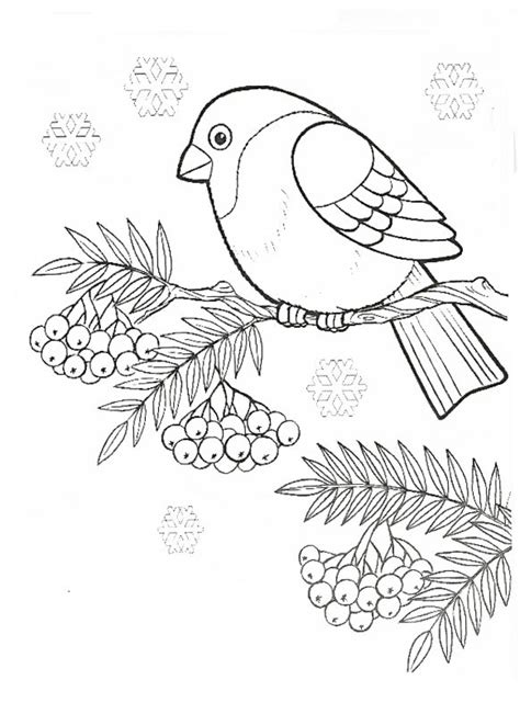 bullfinch coloring pages    print