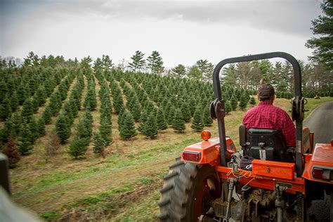 100 christmas tree farms connecticut christmas