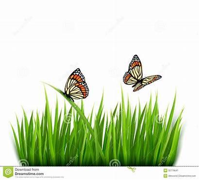 Grass Background Nature Vector Butterflies Border Clipart