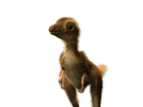 Baby T. Rex Dinosaurs Were Fuzzy And The Size Of Small