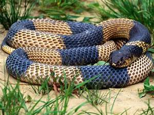 Snake | The Biggest Animals Kingdom