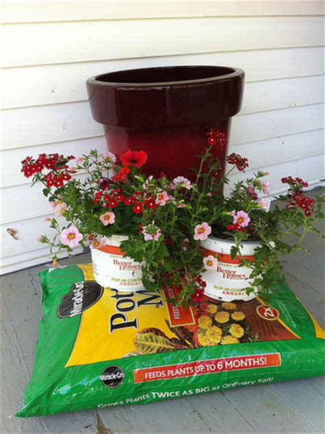filler ideas for large planters frugal upstate