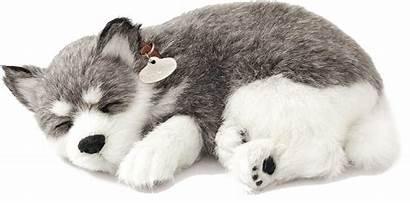 Husky Alaskan Perfect Petzzz