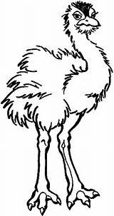 Strauss Emu Ausmalbilder Kolorowanki Tiere Kraeftiger Coloring Colorear Strusie Colorir Avestruz Vogel Imprimir Ausmalen Ptaki Avestruzes Gratis Struś Malvorlagen Ostrich sketch template