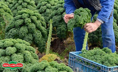 comment cuisiner le kale comment cuisiner le kale 28 images 5 id 233 es pour