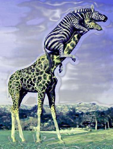 giraffe  zebra  topic comic vine