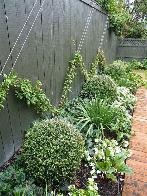 climbing plants  ideas  arranging  garden