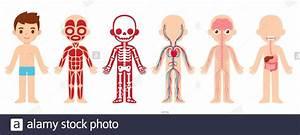 My Body  Educational Anatomy Body Organ Chart For Kids
