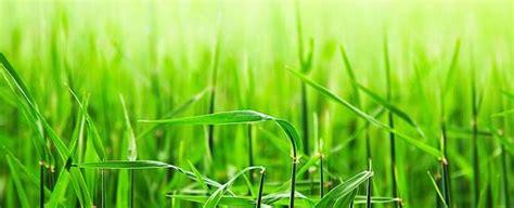 agen acemaxs surabaya hama  penyakit  tumbuhan