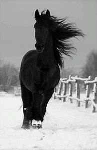 Black horse running in the snow. | black and white | Pinterest