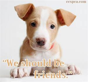 "Cute Puppy Caption - ""We should be friends."" 