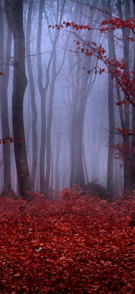 forest fog autumn trees branches