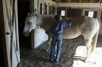 Horse Grooming Horses Equine Groomed Winter Tips