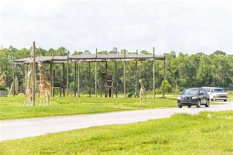 zoo florida drive safari near through giraffes driving lion palm animal country september cars usa beach