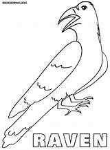 Crow Coloring Pages Raven Animal sketch template