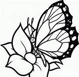 Coloring Pages Butterflies Flowers Butterfly Printable sketch template