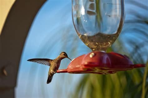 hummingbird nectar how to make homemade hummingbird nectar recipe going evergreen