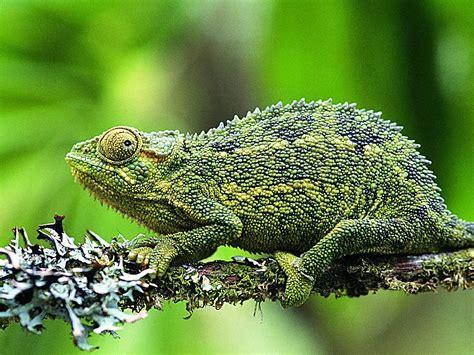 Lizard Wallpaper Wallpapers,lizard Wallpapers & Pictures