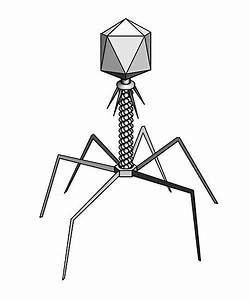 U0026quot T4 Bacteriophage Virus U0026quot  Posters By The Vexed Muddler