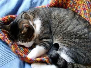 why do cats blankets 5 reasons why cats on blankets or clothing catster