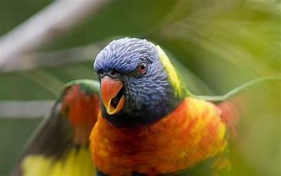 Birds Windows Wallpapers Bird