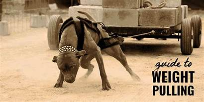 Pulling Weight Dogs Dog Training Guide Competitions