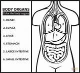 Coloring Anatomy Pages Organs English Printable Organ Learn Science Easy Experiments Kindergarten Human Sheets Heart Clipart Bible Upper Printables Puzzle sketch template