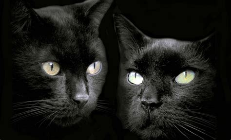 Background Black Cat by 15 Enchanting Wallpapers Of Beautiful Black Cats