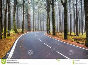 An, Asphalt, Road, That, Goes, Through, A, Misty, Dark, Misterious, Pine, F, Stock, Image
