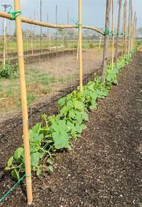 Exotische Früchte Im Eigenen Garten : melonen pflanzen so gelingt der anbau im garten ~ Lizthompson.info Haus und Dekorationen