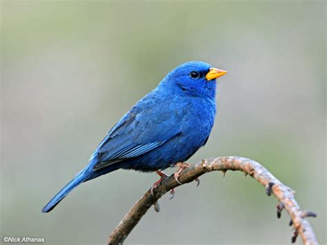 pin 1999 blue bird tc1000 on pinterest