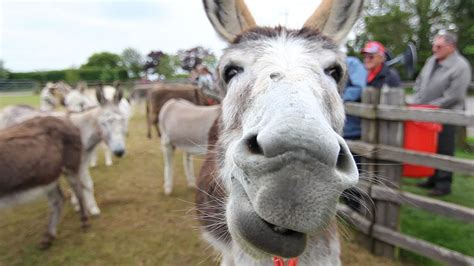 donkey sanctuary birmingham sutton coldfield town gate
