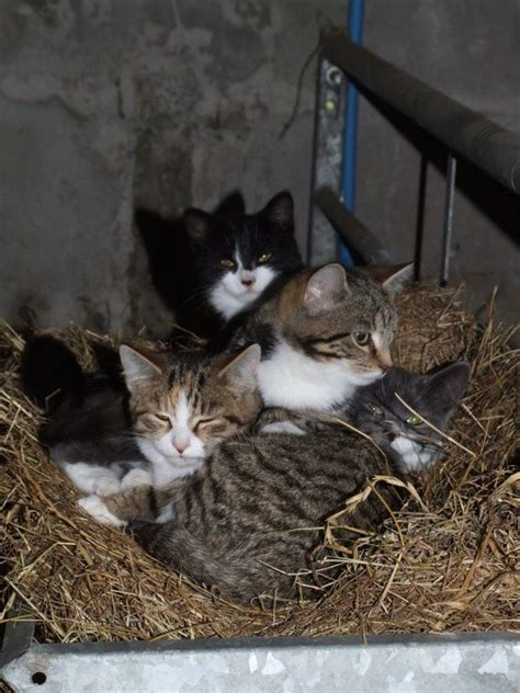 cat farm farm cats search childhood favorites