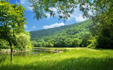 images  beautiful summer nature     desktop