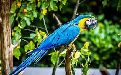 Bird Parrot Macaw Tropical Wallpapers13