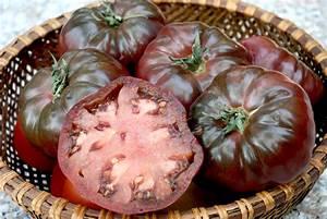 Tomate Noir De Crimée : tomate semer et cultiver ooreka ~ Dailycaller-alerts.com Idées de Décoration